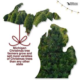 michigan christmas tree facts