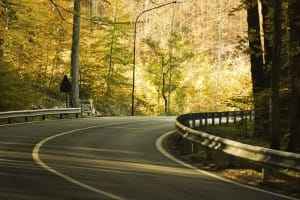 Curve in a two lane road amid tall trees with green leaves